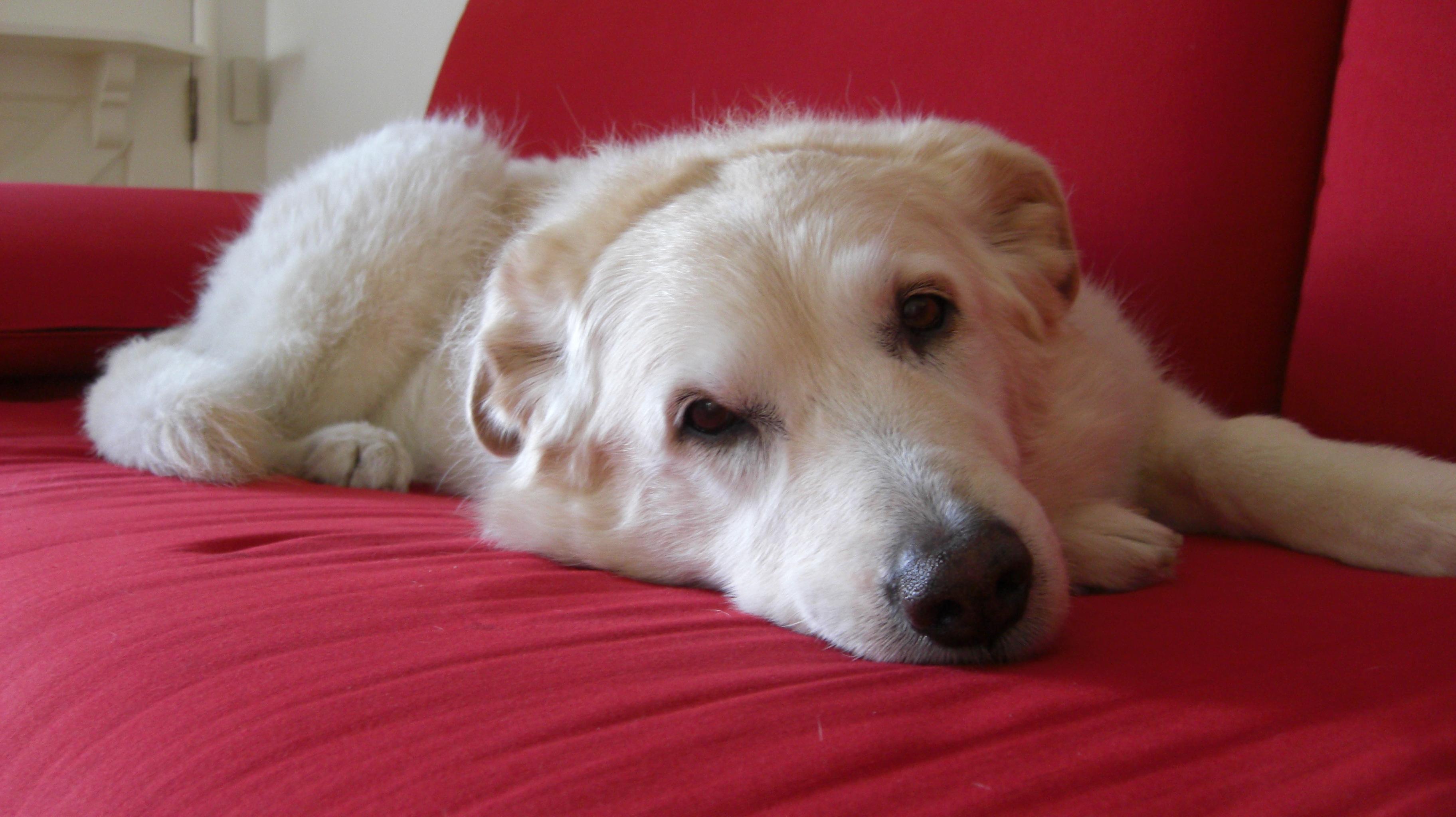Poet Dog Rescue
