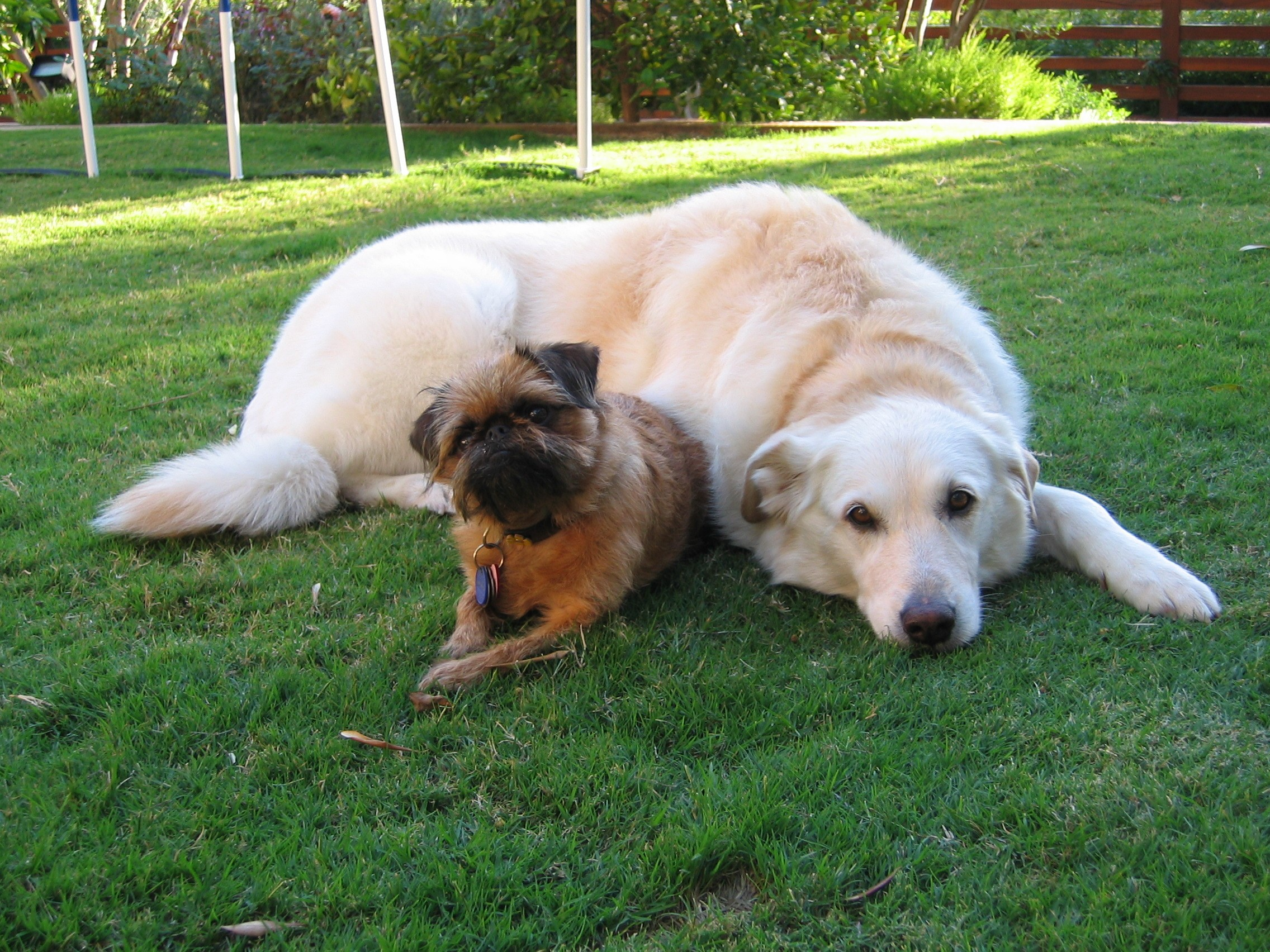 being dog obcesessed is� adventures in dog land